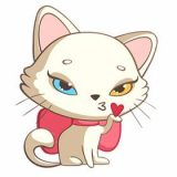 Nika the Cool Cat